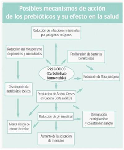 Prebioticos_probioticos