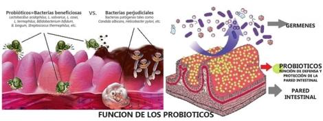 PROBIOTICOS-PREBIOTICOS 1