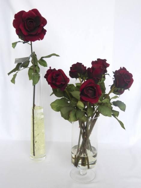 sonia mompó rosas