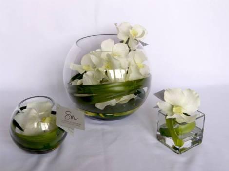 sonia mompo orquideas