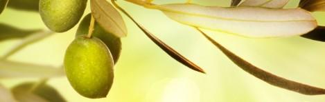 aceite-de-oliva-bosana